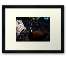 The Great Argus  Framed Print