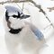 Blue Jay in Winter by lorilee