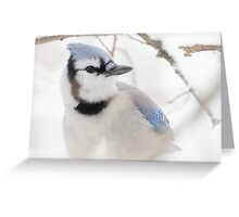 Blue Jay in Winter Greeting Card