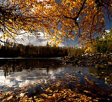 Algonquin in Autumn by Cale Best