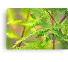 Green Cypress  Metal Print