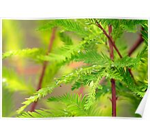 Green Cypress  Poster