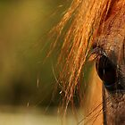 Horses eye close-up by Graham McAndrew