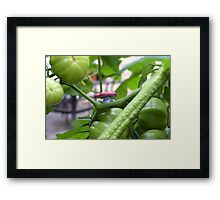 Vileplume and Green Tomatos Framed Print