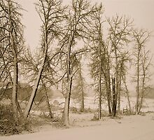 Winter's first snowfall - Sepia - Alberta, Canada by Jessica Karran