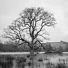 The Tree by John Burtoft