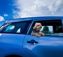 Dog by Car Window by Edmond Leung
