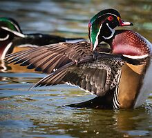 Two Woodies by Gary Gray