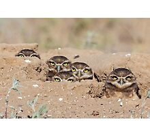 Burrowing Owls Photographic Print
