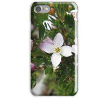 Lemon-scented Boronia, Kangaroo Moor at Mount Field iPhone Case/Skin