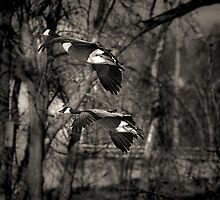Two Flying Geese by Thomas Young