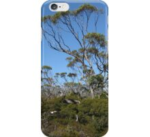 Snow gums near Mawson Saddle Mount Field iPhone Case/Skin