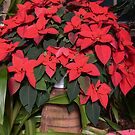 Basket Of Poinsettia by Kathleen Struckle