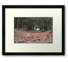 Rustling down the Path Framed Print