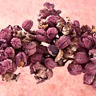 Dried Lilac Blossom Macro  by Sandra Foster