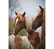 Assateague Island Wild Horses Photographic Print