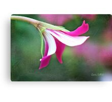 Sassy Pink Geranium Floret on Painted Background Canvas Print