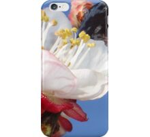Apricot Blossom iPhone Case/Skin