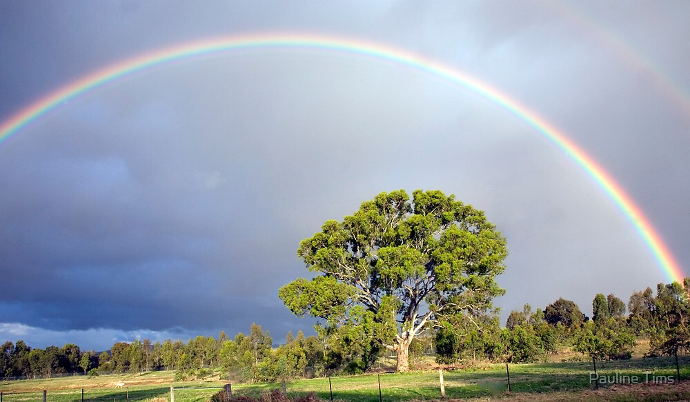 Rainbow over Yan Yean by Pauline Tims