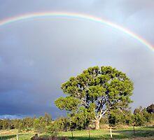 Rainbow over Yan Yean by Pauline Tims