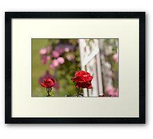 Romantic Garden Roses Framed Print