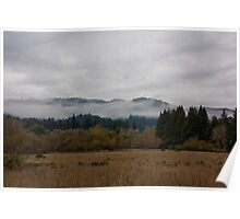 Dusk, Henry Cowell State Park Poster