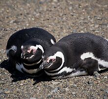 A Pair of Magellanic Penguins at Magdalena Island, Chile by Gerda Grice