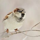 Sparrow In Pastels by lorilee