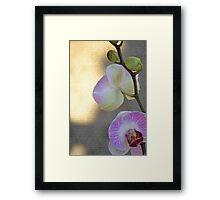 Pink Orchid Floral Framed Print