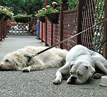 It's a dog's life by Liesl Gaesser