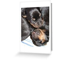A Beautiful Dreamer In A Litter of  Rottweiler Puppies Greeting Card