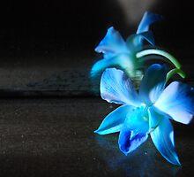 Blue Valentine... by fuchsiaberry