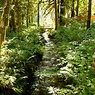 McKenzie River, Oregon by Matt Emrich