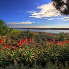 Red Hot Aloes by manateevoyager