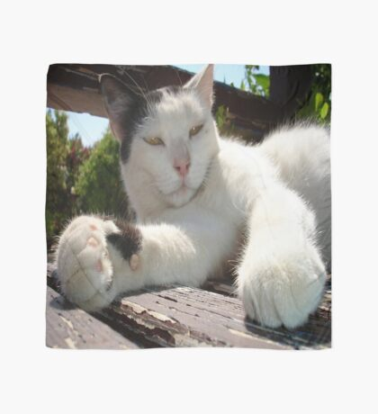 Black and White Bicolor Cat Lounging on A Park Bench Scarf