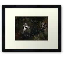 Kingfisher in Holly Hill Framed Print