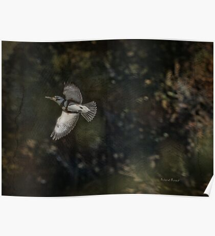Kingfisher in Holly Hill Poster