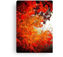 Fall colors on a gray day Canvas Print