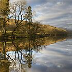 Tree Reflections-Coniston Water by VoluntaryRanger