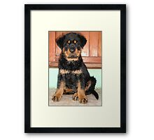 A Discontented and Wet Rottweiler Puppy  Framed Print