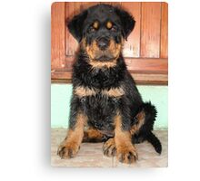 A Discontented and Wet Rottweiler Puppy  Canvas Print