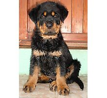 A Discontented and Wet Rottweiler Puppy  Photographic Print