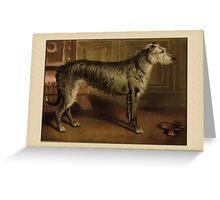 Vintage Irish Wolfhound Greetings Greeting Card