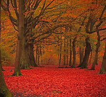Judy Woods Autumnal  by photographylife