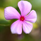 Pink Flower by Vac1