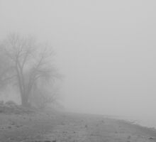Foggy Lake Shoreline View BW by Bo Insogna