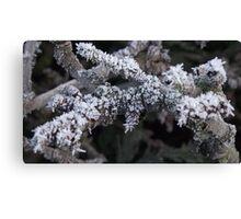 Frosty Branch Canvas Print