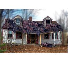 A State of Wisteria Photographic Print