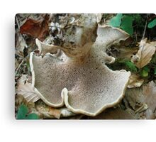 Sarcodon imbricatus- Habichtspilz- Scaly Hedgehog Canvas Print