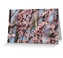Pink Branches Greeting Card